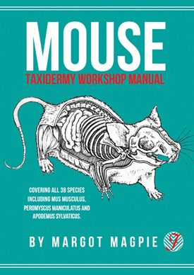 Mouse taxidermy workshop manual