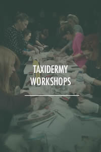 Taxidermy Workshops